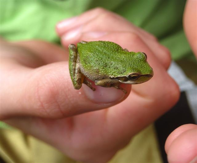 Boy Holding A Green Tree Frog