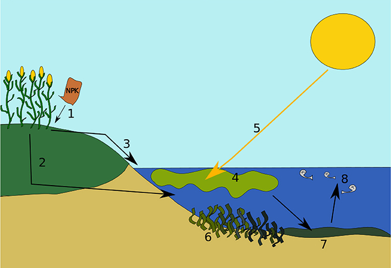 Figure 2 - Stages of eutrophication.
