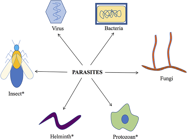 Figure 1 - Different groups of parasitic organisms.